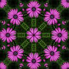 Flower Power by NewfieKeith