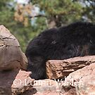 Sleepy Time Bear by Luann wilslef
