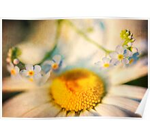Daisy and Forget-Me-Nots Poster