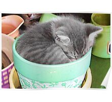 Kitten Snuggle Pot Poster