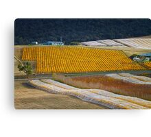 Vineyard, Richmond, Tasmania Canvas Print
