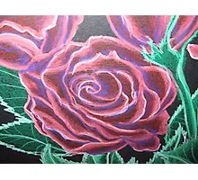 A Rose Among Roses Photographic Print