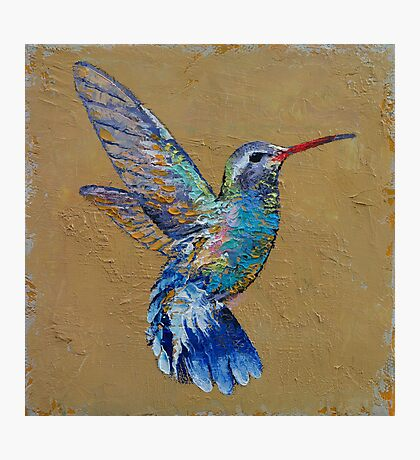 Turquoise Hummingbird Photographic Print