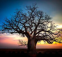 Dusk At The Dinner Tree by Sandra Anderson