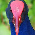 A Purple Swamphen - Another Long-Range Portrait by stevealder