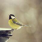 Tomtit Bird  by LenkaOBS