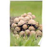 Fungi Collective Poster