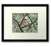 Red Breasted Angel Framed Print