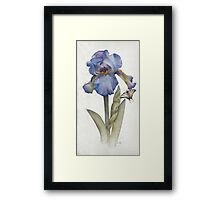 Blue Iris with Swallowtail Butterfly Framed Print
