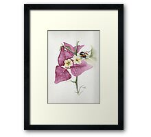Bougainvillea with Bee Framed Print