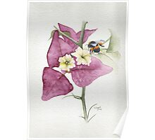 Bougainvillea with Bee Poster