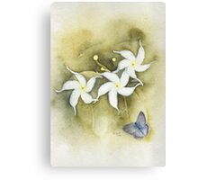 Star Jasmine with Lavender Blue Butterfly Canvas Print
