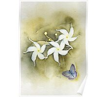 Star Jasmine with Lavender Blue Butterfly Poster