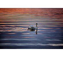 Swan Lake Abstract Photographic Print