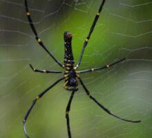 Spider on web with green background Sticker