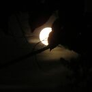 Full Moon Soltice by virginian