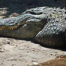 gator 001 by joeschmoe96