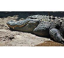 gator 001 Photographic Print