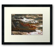 Gator 006 Framed Print