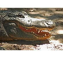 Gator 006 Photographic Print