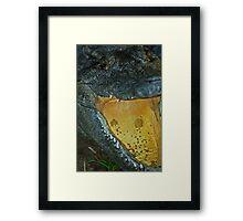 Gator 014 Framed Print