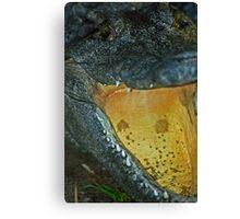 Gator 014 Canvas Print