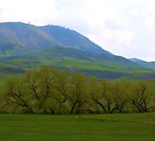 Green valley by Brian Persons