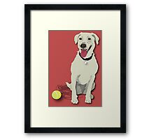 yellow lab with tennis ball Framed Print