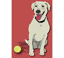 yellow lab with tennis ball Photographic Print