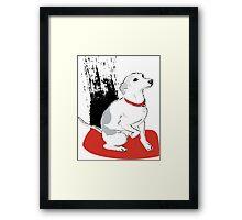 italian greyhound illustration Framed Print