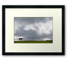 Walking Solitary Horse Framed Print