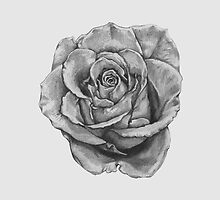 Black And Grey Rose by Total-Cult