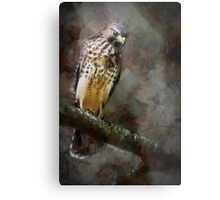 Young Red Shoulder Metal Print