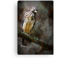 Young Red Shoulder Canvas Print