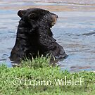 Swim Time  by Luann wilslef
