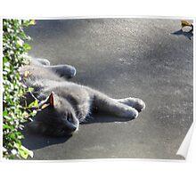 Ma Ma Sleeping Poster