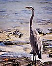 Great Blue Heron by Yukondick