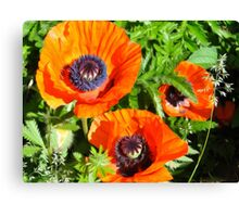 Wild Poppies - Oil Painting Style II Canvas Print