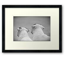 Bull Terrier Siblings Framed Print