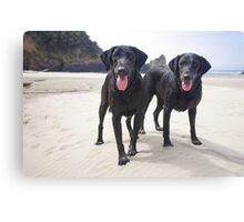 Sand Dogs Canvas Print