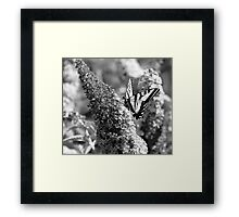 Yellowtail Butterfly No.2  Framed Print