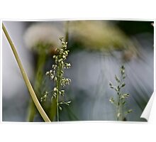 Grass and abstract Poster