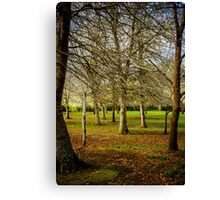 Morning Daily 074   HiRes Canvas Print