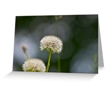 Dandelion and abstract 2 Greeting Card