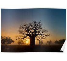 Misty sunrise Boab Poster