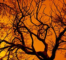 Scorched Tree by bexilla