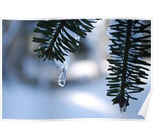 Icy Evergreen Poster