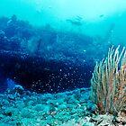 The wreck of the Yongala by David Wachenfeld