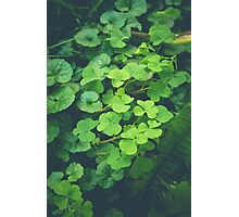 Looking Over a Four Leaf Clover Photographic Print