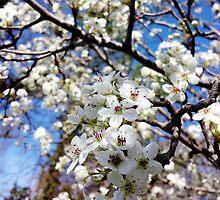 Springtime Past by Scott Mitchell